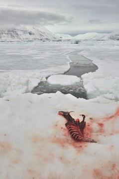 Wśród lodów i śniegów czasem trafia się i trochę koloru... (Fot. Michał Jastrzębski)
