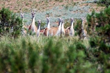 Zwierzęta w Argentynie