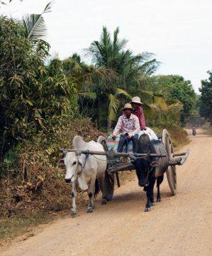 Kambodżańska wioska. Wóz ciągnięty przez woły
