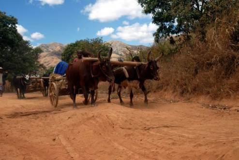 Życie codzienne na Madagaskarze