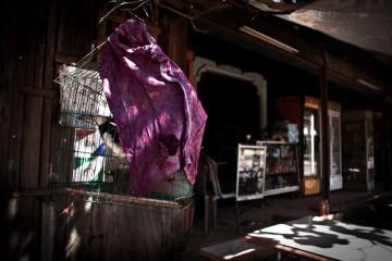 Najpopularniejsze domowe zwierzątko w Laosie