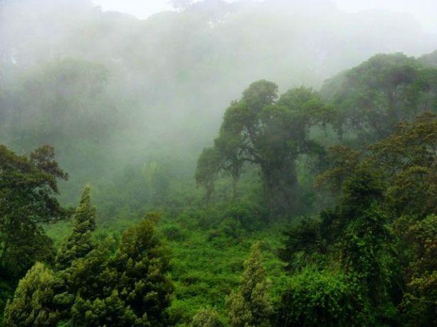 Rwanda. (Fot. Beata i Jan Frączak)