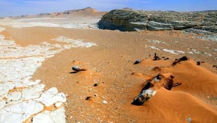 Martwy osioł na pustyni Sahara