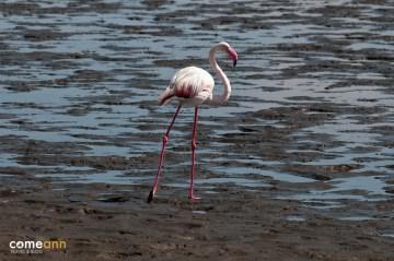 Flamingi z Namibii