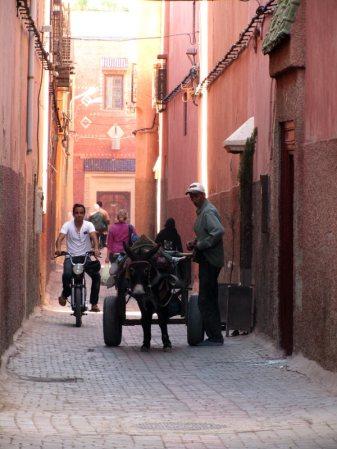 Osiołek to popularny środek transportu w Maroku