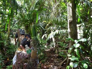 Dżungla na indonezyjskiej wyspie Pulau Sipora - trekking