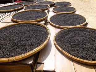 Prażenie pieprzu w Kambodży