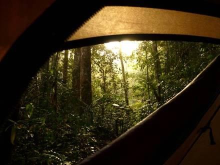 Nocleg pod namiotem w lesie deszczowym