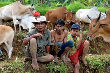 Zawodnicy wyścigów Pacu Jawi na Sumatrze - foto