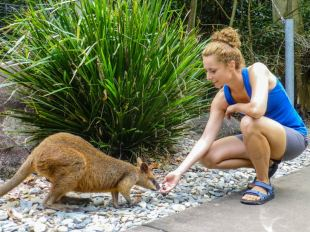 Kangur i turystka w Australii