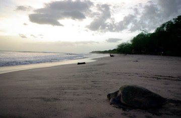 Plaża Chacocente. Nikaragua