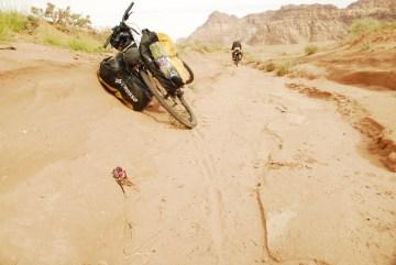 Rowerem przez pustynię w Jordanii - zdjęcia roślin