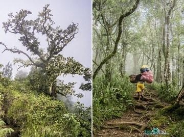 Trekking na wyspie Lombok - foto