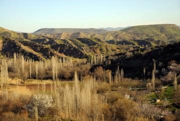Topola tabrizka - iracki Kurdystan
