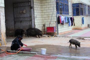 Ulica w Litangu, Tybet, Chiny
