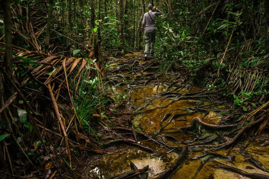 Trekking przez dżungle Borneo - foto