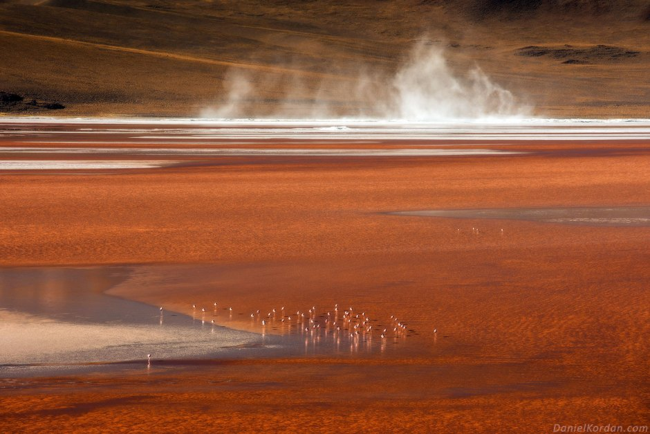 Boliwia, flamingi na Salar de Uyuni, przyroda