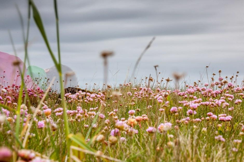 Zdjęcia z Islandii - Katarzyna Nizinkiewicz