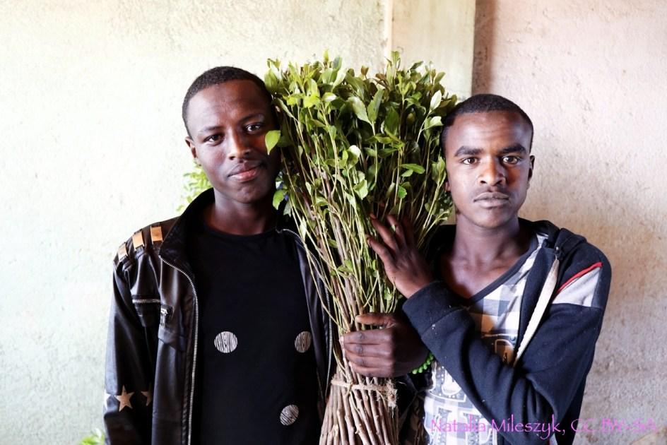 Etiopia, sprzedawcy khatu w Aweday, narkotyki, foto