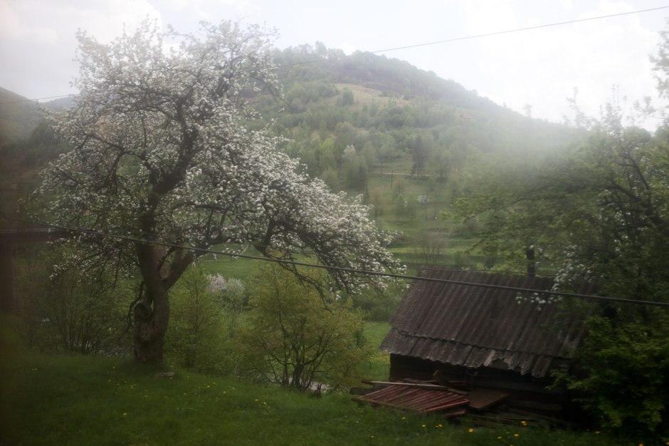 Ukraina, Kolej Zakarpacka