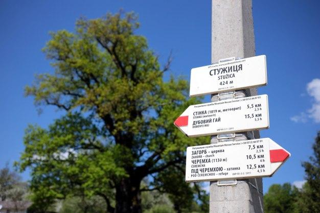 Ukraina, Zakarpacie, tysiącletni dąb Dziadek w Stużicy