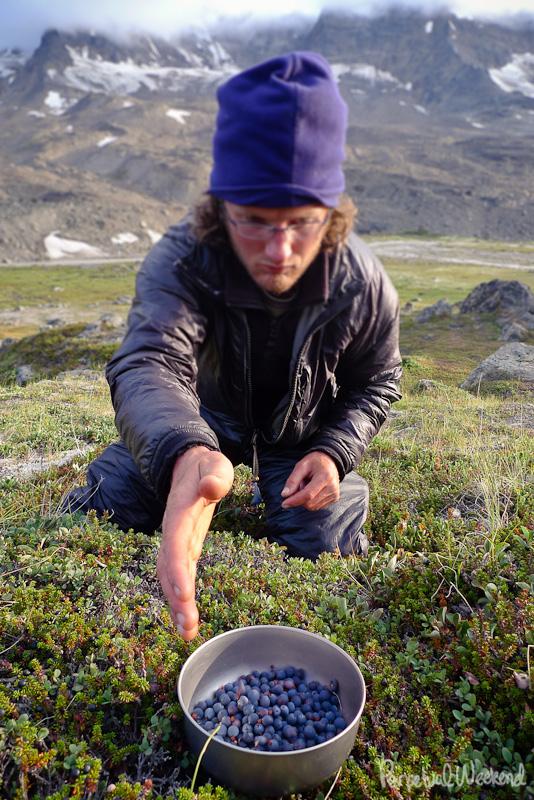 picking wild huckle berries blue berry bear alaska
