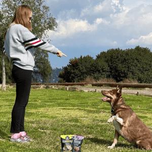 aprendizaje perros