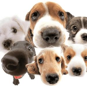 Día Mundial del Perro: origen, significado y por qué se celebra el 21 de julio