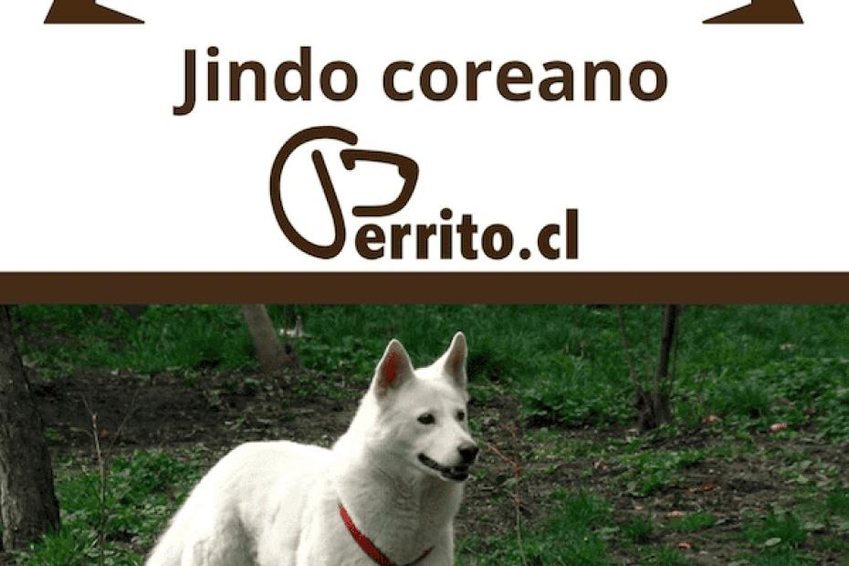 Jindo coreano