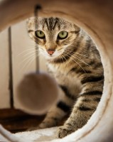adorable-animal-cat-cute-271611