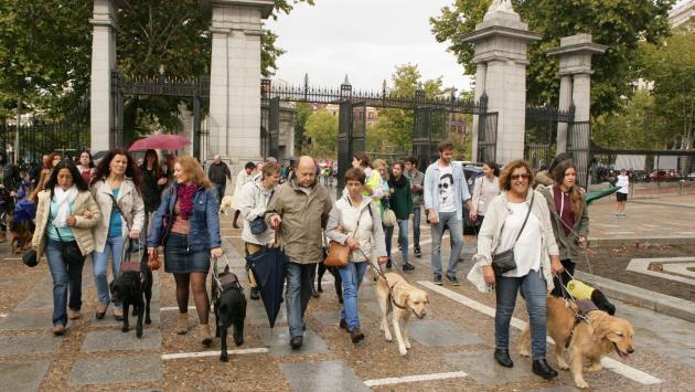 Usuarios de perro guía pasean por el Parque de El Retiro