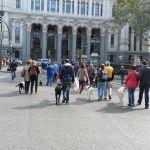Parte del grupo durante el paseo, atravesando la Plaza de Cibeles
