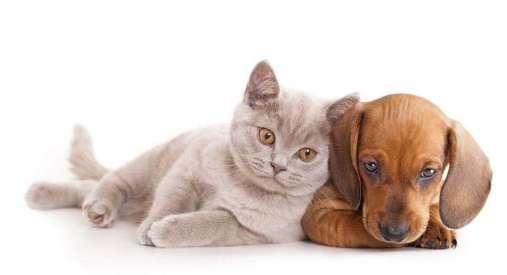 Perro con Gato