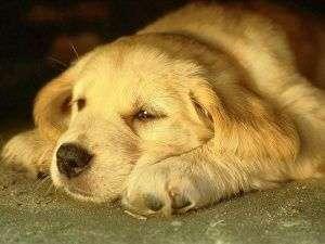 perro triste