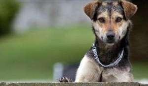 Collar-de-entrenamiento-canino