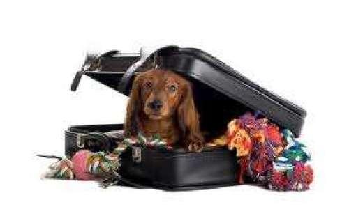 perros de viaje