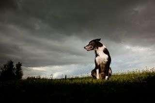 Las tormentas y los perros