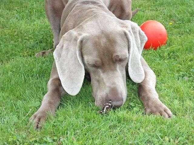 dog-143653_640