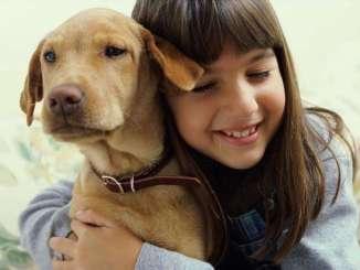 Collares Antiparasitos para Perros