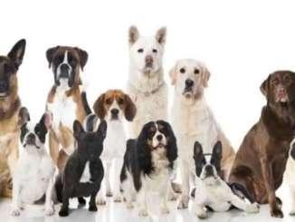 ¿Por qué existen piensos para perros según las edades?