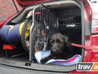 Organizar las Vacaciones con tu Perro