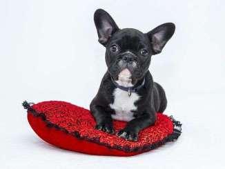 Razones para No Usar Correas Extensibles para Perros