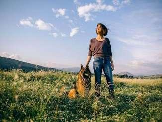 Los Perros son Animales Sociales