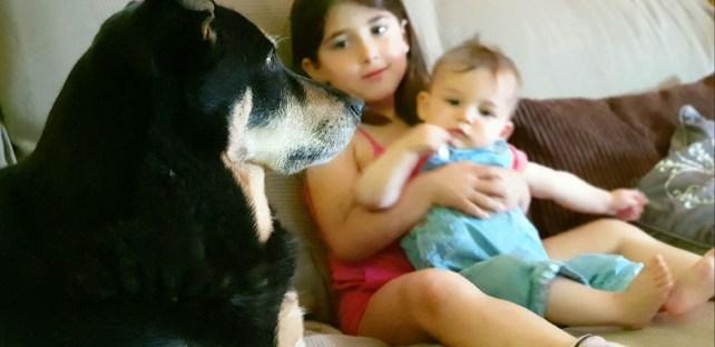 convivencia entre niños y perros