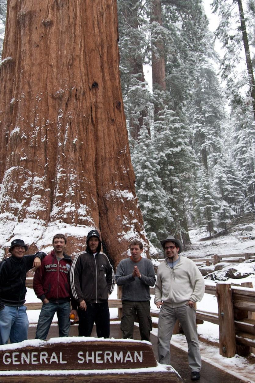 El General Sherman, el árbol más voluminoso del mundo, Parque Nacional de las Secuoyas, EE.UU.