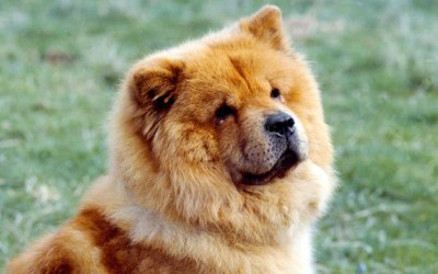 Dog Breeds & Homeowners Insurance