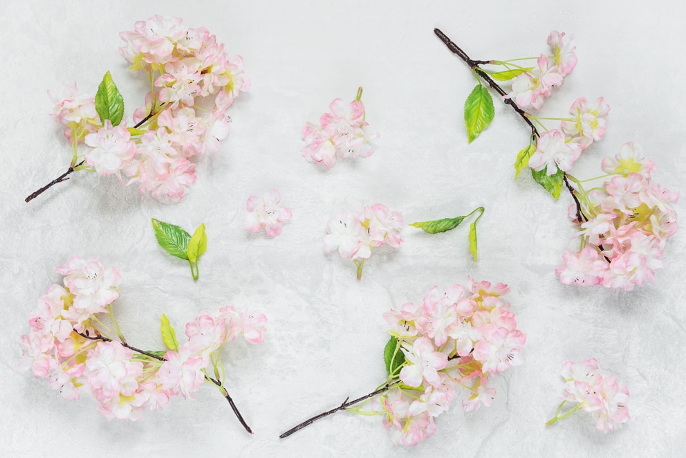 Beautiful cherry flowers on stone background