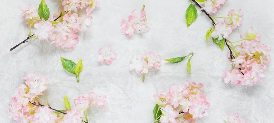 Beautiful cherry flowers on stone background