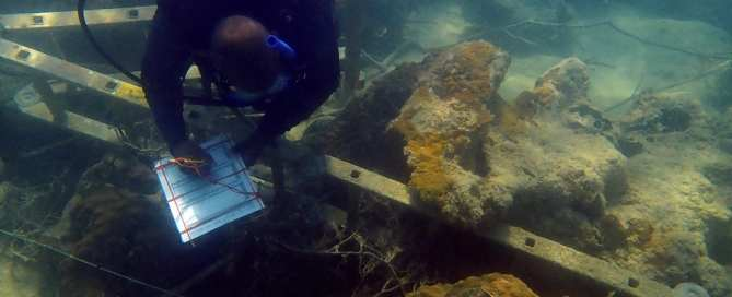 Fred Arnett of The Nature Conservancy surveys debris and toppled coral heads on Mermaid Reef off Marsh Harbour.