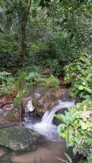 Stream in Ranong